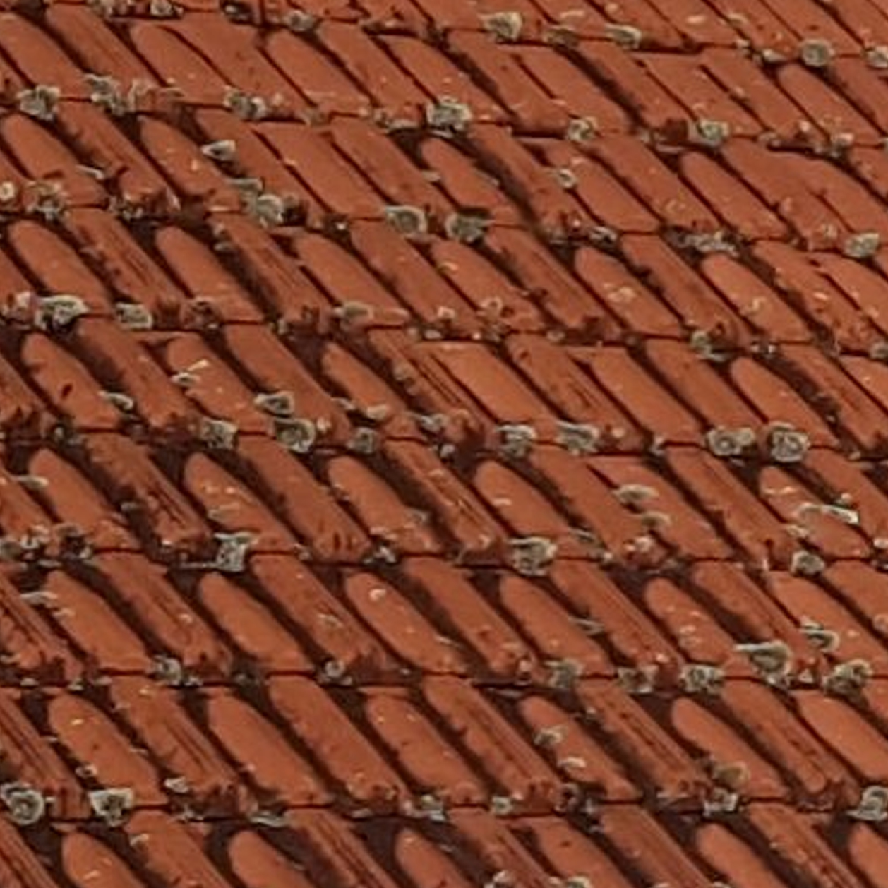 Roof Cleaning - Moss, Algae and Lichens on Clay Tile roof