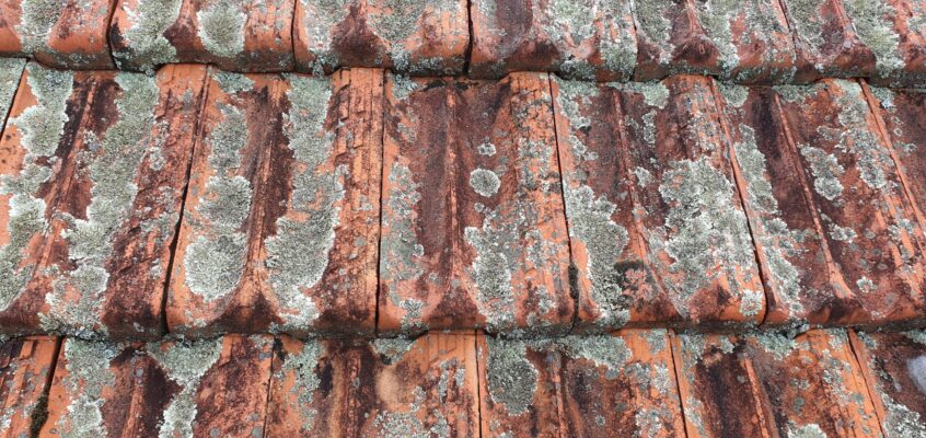 Roof Cleaning- Moss, Algae and Lichens on Clay Roof Tiles