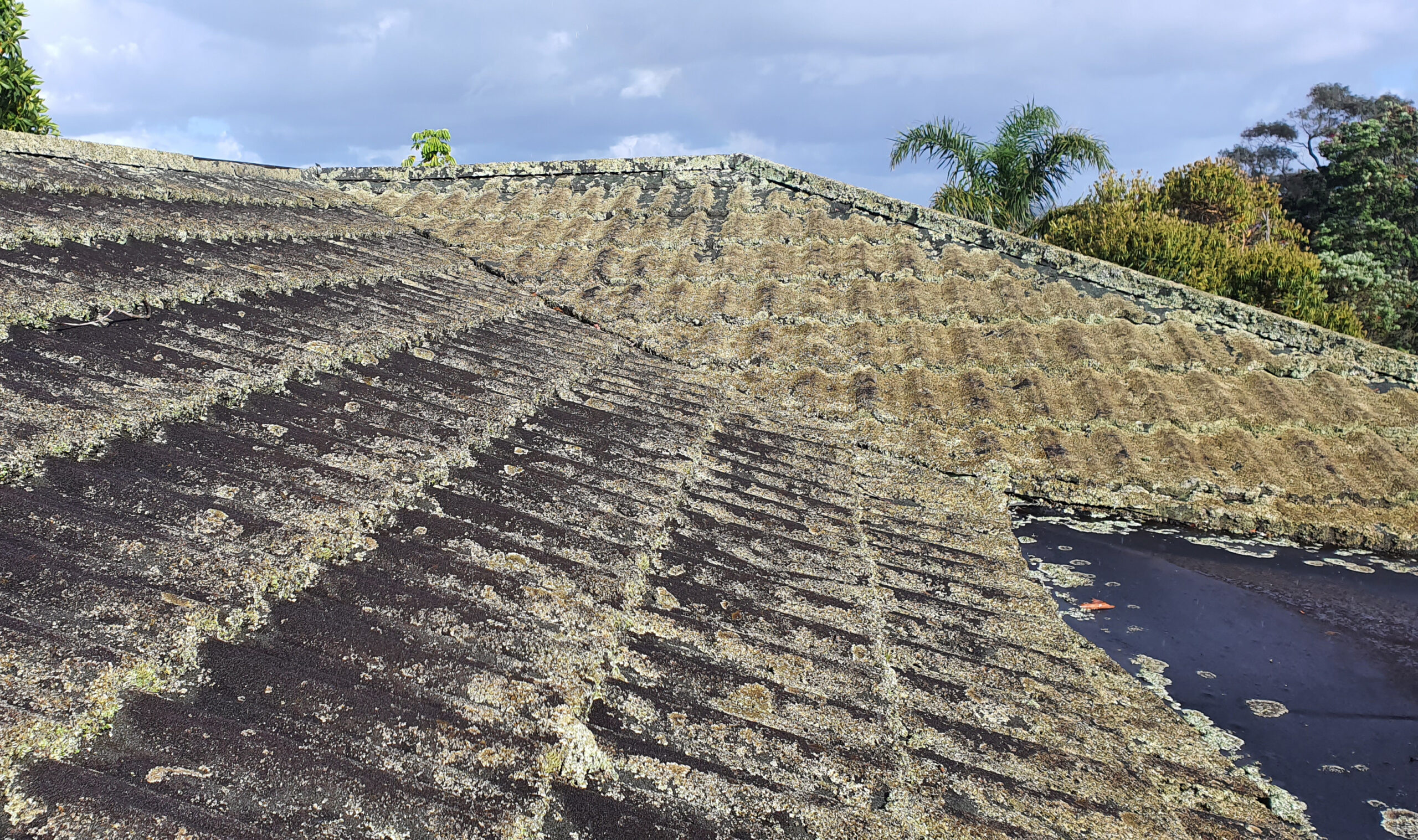 Roof Cleaning. - Lichen and Algae on Gerard Roof