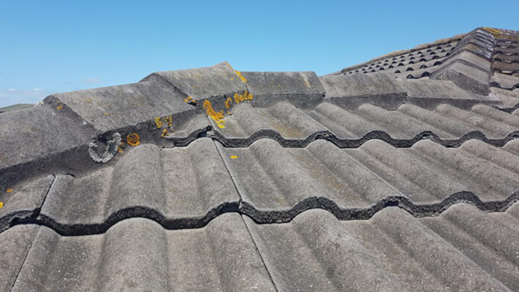 Roof Cleaning - Moss, Algae and Lichens on Monier tile roof